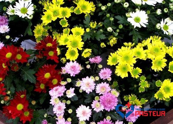 Tác dụng 15 loại hoa tươi thông dụng với sức khỏe