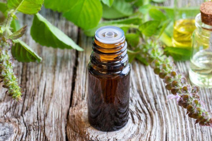 Tác dụng của tinh dầu hương nhu đối với sức khỏe con người