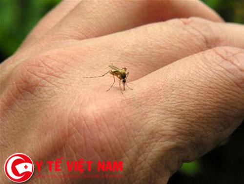 Chuyên gia hướng dẫn điều trị sốt xuất huyết tại nhà